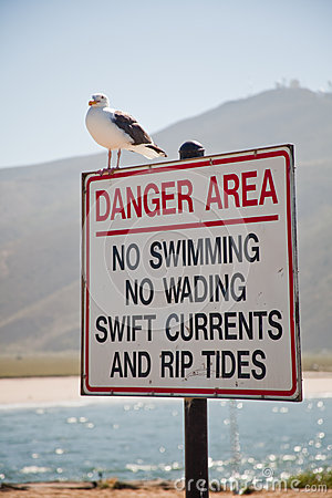 Gull On a Sign