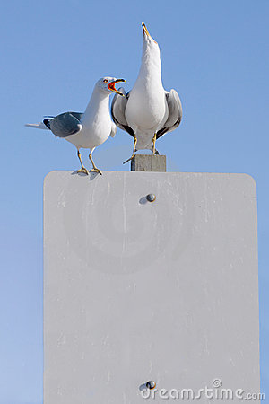 Free Gull Story Royalty Free Stock Photo - 2769465