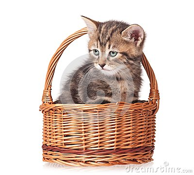 Gullig kattunge