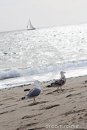 Free Gulls And Sailboat Royalty Free Stock Image - 577236