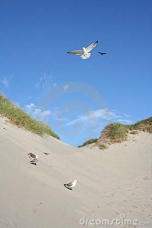 Gulls at a beach