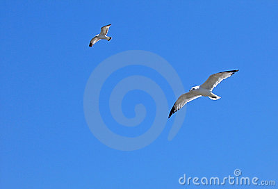 Gulls In Flight Royalty Free Stock Photo - Image: 107135