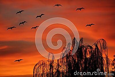Gulls flying at sunset