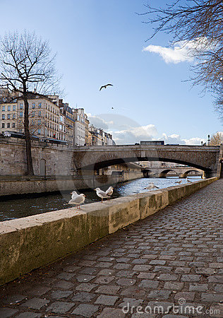 Free Gulls In Paris Royalty Free Stock Images - 538909