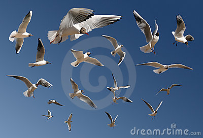 Gulls isolated on blue