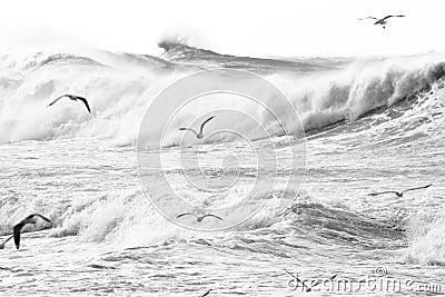 Birds over stormy sea