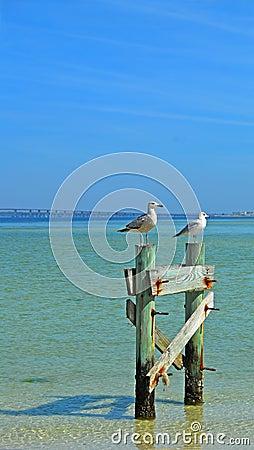 Gulls at Seashore on Poles