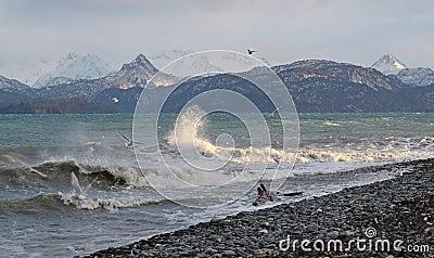 Gulls with splashing waves