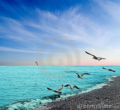 Free Gulls Under A Sea Coast Royalty Free Stock Photography - 11237867