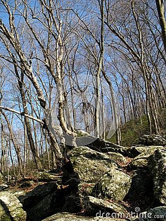 Gunpowder Forest in March