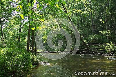 Gunpowder River Trees