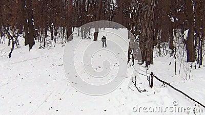 Guy skier na floresta coberta de neve video estoque