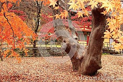 Gyeryongsan National Park Korea