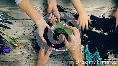 Händer av familjemedlemmar som planterade blommor i en kruka Handnärbild som hyvlar blommor i en kruka arbeta i trädgården för be