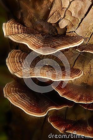 Härlig svamp