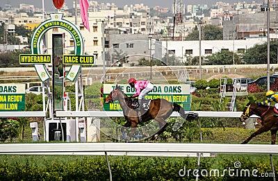 Häst som segrar på Hyderabad Redaktionell Arkivbild