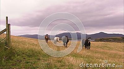 Hästar och ett gräs- fält arkivfilmer