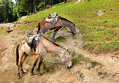 Hästar två