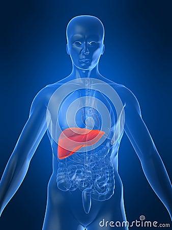 Hígado humano
