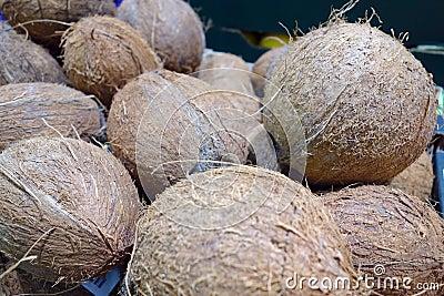 Hög av kokosnötter