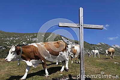 Hölzernes Kreuz und Kühe auf dem Berg