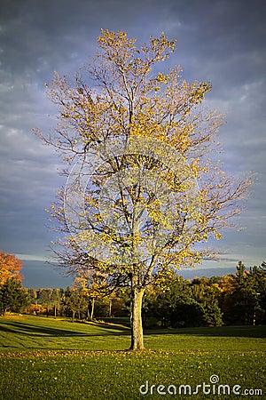 Hösttree