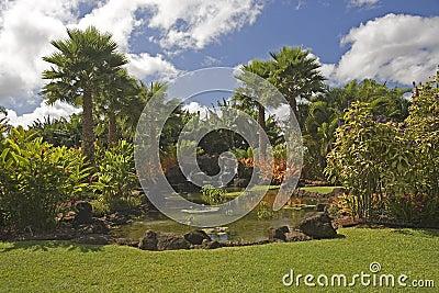 H50 Tropical garden paradise