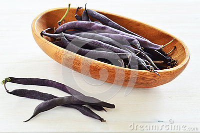 Haba rápida de la cera púrpura