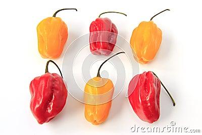 Habanero Peppers (Capsicum chinense)