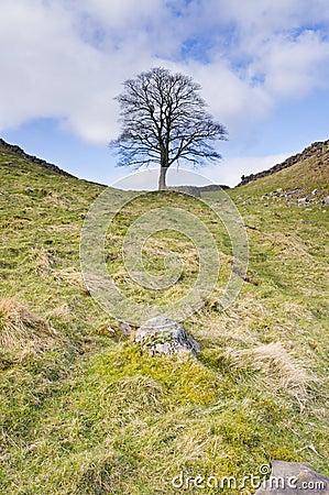 Hadrians Wall sycamore gap vertical