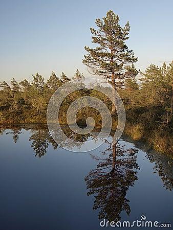 Hags in a marsh