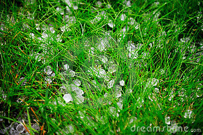 Hail after storm on grass
