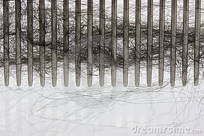 Hair of a black Newfounland dog on a brushing comb
