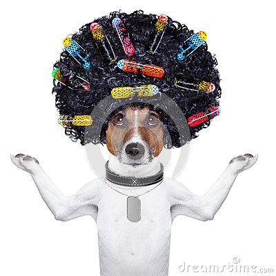 Free Hairdresser Dog With Curlers Stock Photography - 32891022