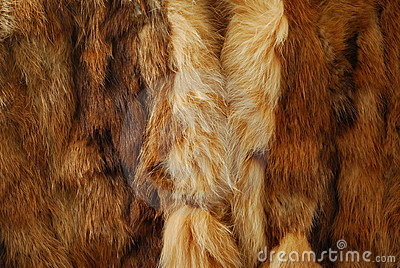 Hairly animal fur