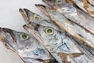 Hairtail fish