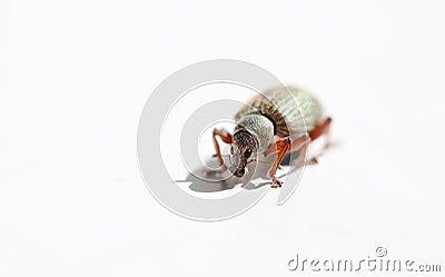 Hairy bug