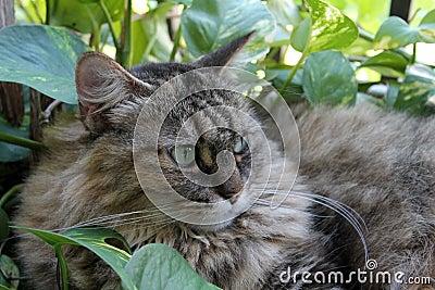 Hairy cat in garden 06