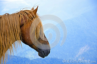 Hairy horse head on a bluish mountain landscape