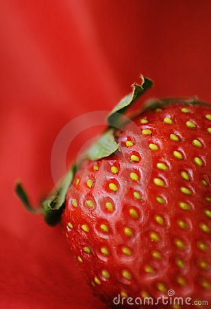 Free Hairy Strawberry Macro Stock Photo - 844160
