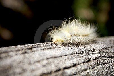 Hairy worm crawling on the log
