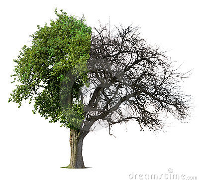 Free Half Green Half Bare Tree Stock Image - 8678781