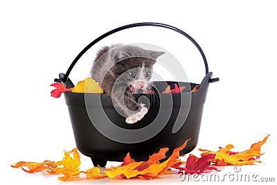 Halloween Cat-in-Training