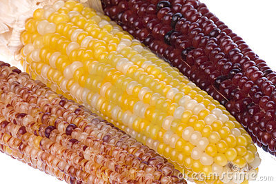 Halloween Corns Isolated