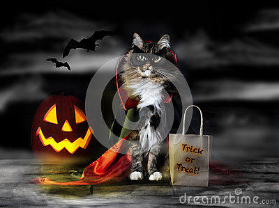 Halloween Count Dracula Cat