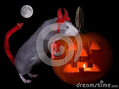 Halloween devil rat