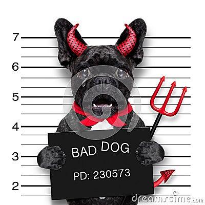 Free Halloween Mugshot Dog Stock Image - 77734731