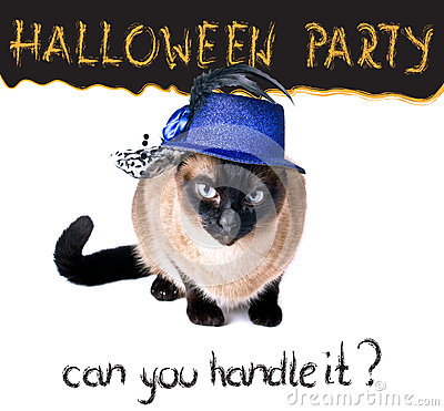 Halloween party banner funny edgy jumpy Siamese Hilarious Cat