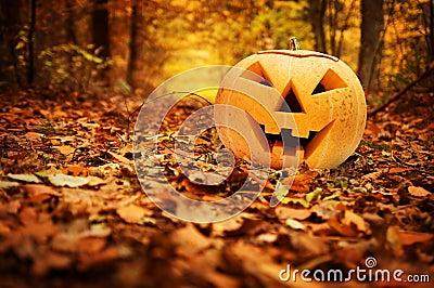Halloween pumpkin. Autumn forest