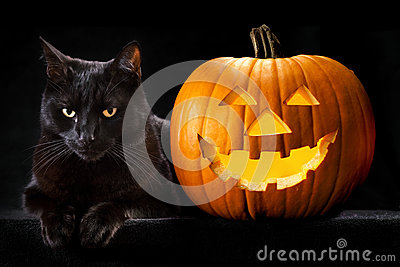 Halloween pumpkin black cat